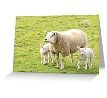 white sheep with lambs in green field Greeting Card