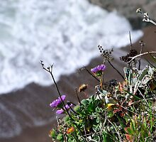 Marin Headlands  •  Cliff Purple Flowers  •   California by Richard  Leon