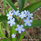Forget-Me-Not Heart by Janine Benedict