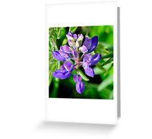 Marin Headlands  •  Lavendar Flower  •   California Greeting Card