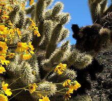 228 Yellow Flowers Jumping Jolla LittleBlack Bear by ptosis