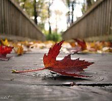 Fall Walkway by Janine Benedict