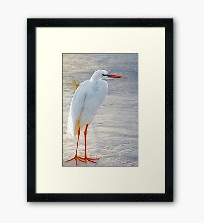 Standing on the beach Framed Print