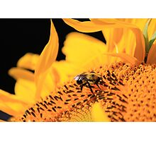 Bumble Bee Flower Photographic Print