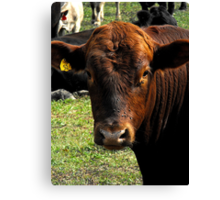 Cows on the...... Side O' The Road  Canvas Print