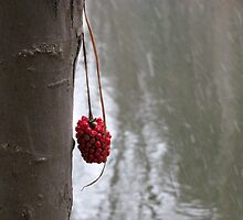 A Bit of Red by Janine Benedict