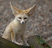 So I'm a little small for my Ears......... by Krys Bailey
