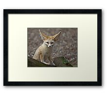 So I'm a little small for my Ears......... Framed Print