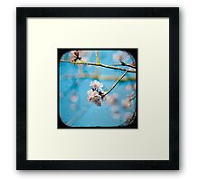 pink on blue Framed Print