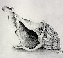 Shell no.3 by Orla Cahill