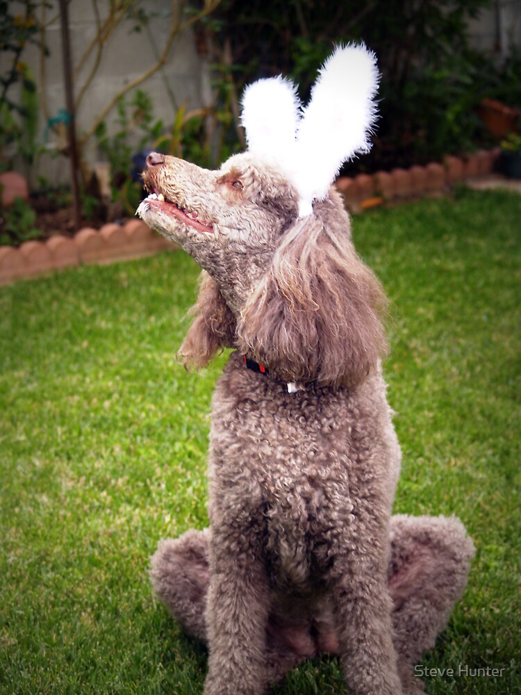 Easter Poodle by Steve Hunter