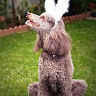 Easter Poodle by Steve Hunter