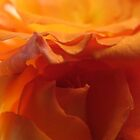 Orange Ruffles..As Is by trueblvr