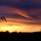 Lake Pochard Sunset by Robert Kendall