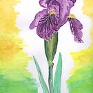 Purple Iris  by seawhisper