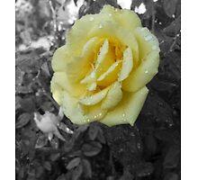 Flower Essence by bettine