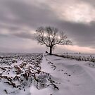 Cold and Lonely by Sarah Couzens