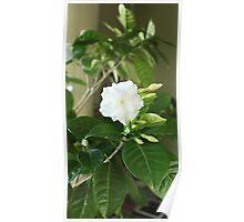indoor flowers Poster