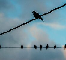 Doves on Wires by laurenpretorius