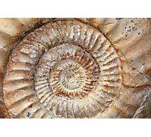 Ammonite Photographic Print