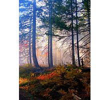 Autumn Fire And Mist Photographic Print