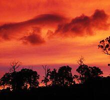 Tangerine Sky ~ unframed by Magicat