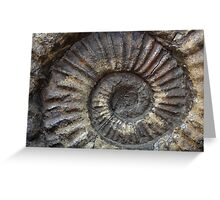 Ammonite Greeting Card