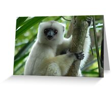 Three images of silky sifakas: Greeting Card