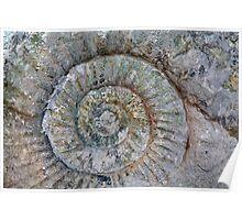 Ammonite Poster