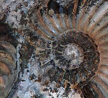 Ammonites by Zosimus
