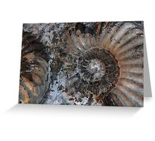 Ammonites Greeting Card