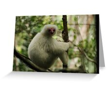 Silky Sifaka Pink Face . Greeting Card