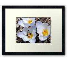 Rebirth... Framed Print