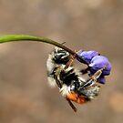 spring fling 2 by VickiOBrien