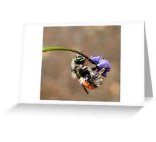 spring fling 2 Greeting Card