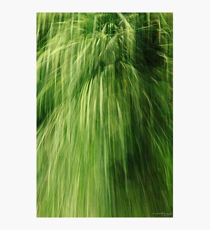 Greenfall (conceptual) Photographic Print