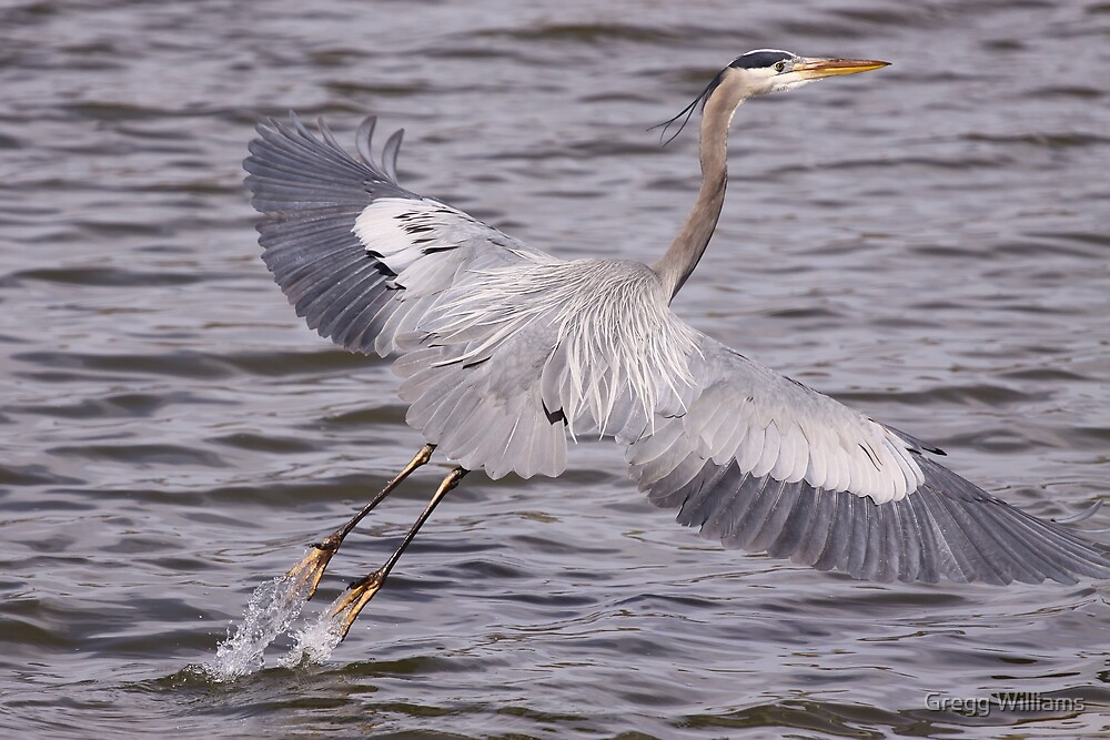 Lift off... by Gregg Williams
