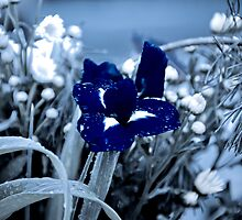 Ice Flower by Harlequitmix