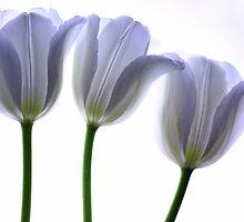 Lilac Chiffon by Rebecca Cozart