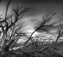 The bones of trees by Kevin McGennan