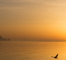 Wings at Sunrise - Toronto Skyline With Flying Geese Sticker