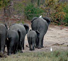 Elephantline by DUNCAN DAVIE