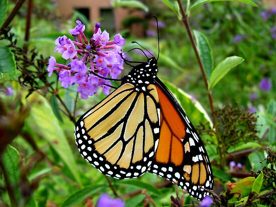 Beautiful Butterfly by Tracy Engle