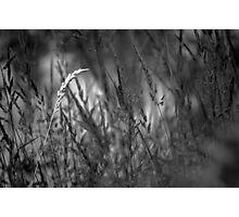 Something Lost Photographic Print