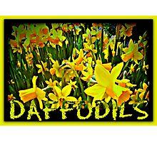 DAFFODILS ARTWORK Photographic Print