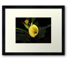 Yellow Calla Lily Flower Framed Print
