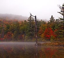 Painted Trees, an Autumn Photograph from the Adirondacks by TonyBeaverPhoto