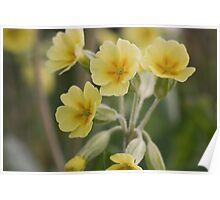 Cowslips  Poster