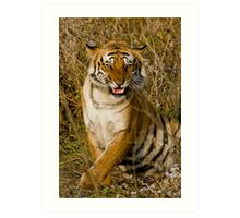 The Royal Bengal Tiger, CNP, India Art Print