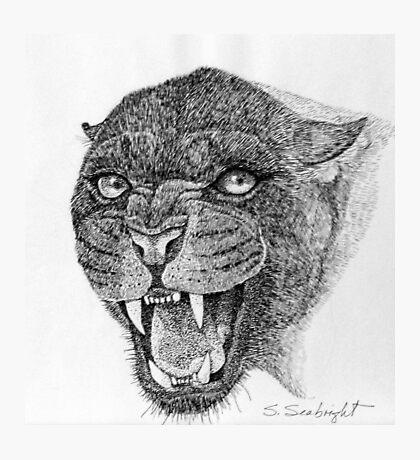 Black Leopard Photographic Print